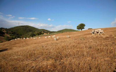 Allevamenti sostenibili: così cerca di cambiare la filiera della carne