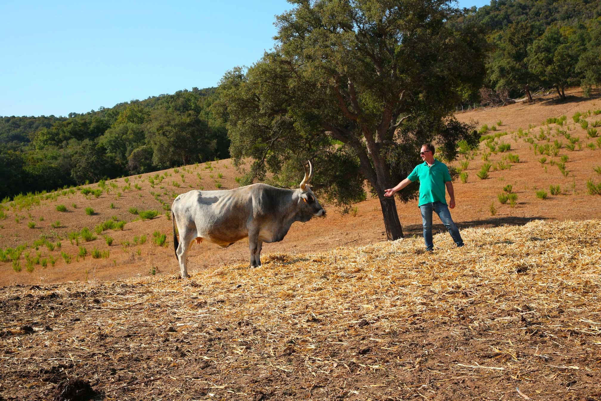 Raffaele Giannarini con un bovino di razza maremmana - I Piaceri della Maremma - Tenuta Santa Barbera