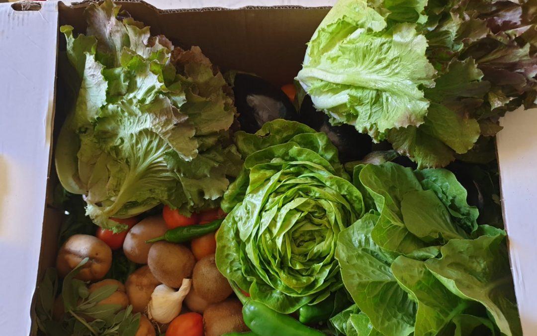 Frutta e verdura biologica. Perchè?