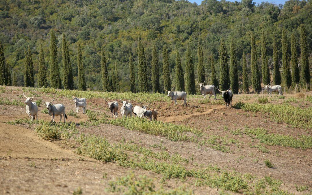In Italia si mangia meno carne ma gli allevamenti diventano più grandi