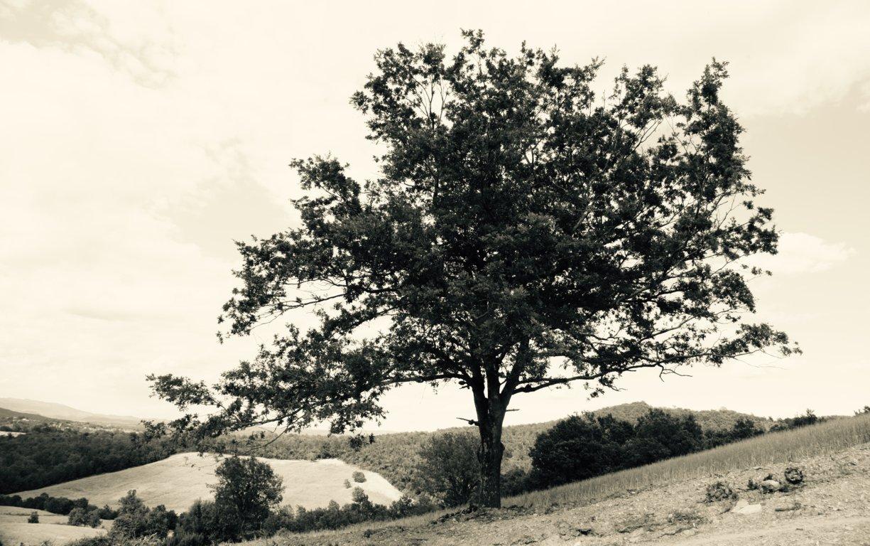Panorama della tenuta di Santa Barbera - I Piaceri della Maremma