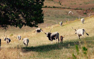 Come vivono gli animali nella tenuta de I piaceri della Maremma? Una filiera cortissima