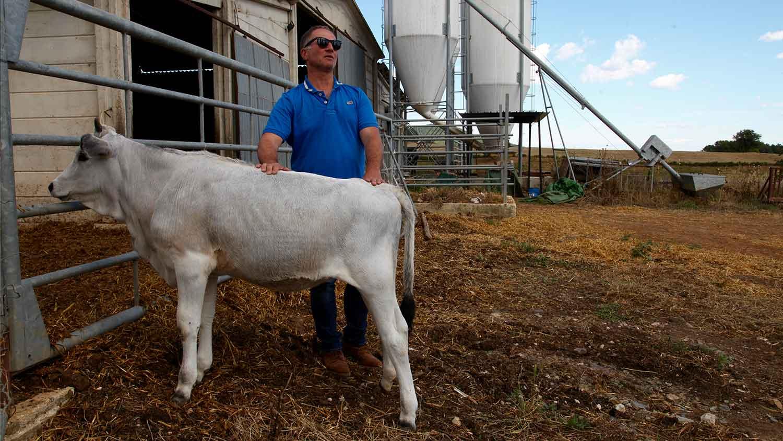 Raffaele Giannarini e un vitello di razza maremmana - I Piaceri della Maremma